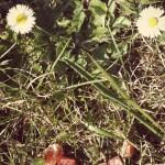 JouR des FleurS