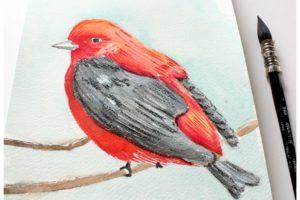 oiseau rouge, aquarelle, dessin aquarelle, atelier créatif, technique aquarelle, atelier peinture