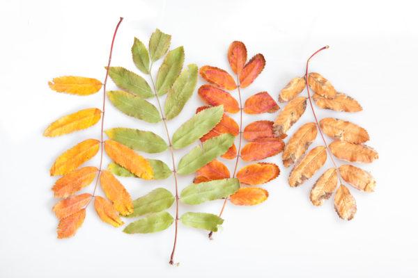 semaine69_automne